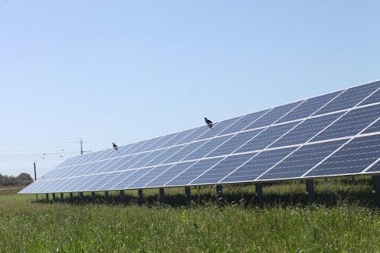 En rad solceller från solcellsparken Solsidan som har uppförts av Varberg Energi